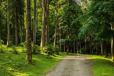 Get Walking! Decrease Risk of PAD With Walking Trails in Your Area